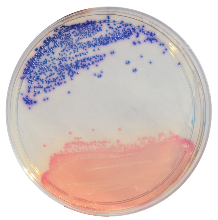 CCA Chromogenic Coliform Agar