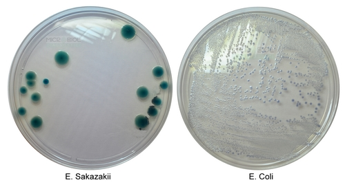 ENTEROBACTER SAKAZAKII CHROMOGENIC MEDIUM