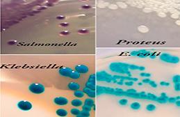 Salmonella Chromogenic Agar